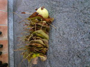 Podzimní housenka je vyrobena napichováním listů stromů na špejli. Na konci má zapíchnutý korek, aby listy nespadly. Hlavičku tvoří malé jablíčko, oči vpíchnuté rozinky nebo koření -hřebíčky.